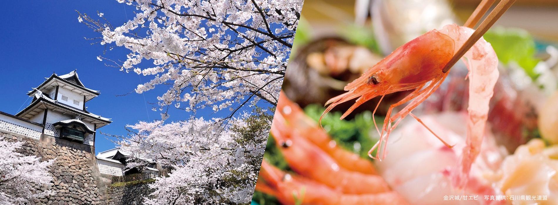 金沢城/甘エビ 写真提供:石川県観光連盟